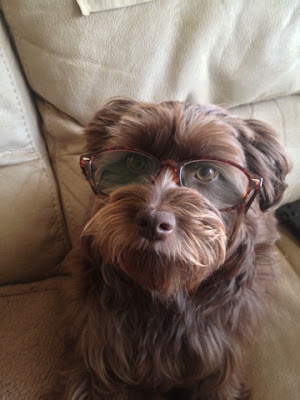 cute dog wearing glasses
