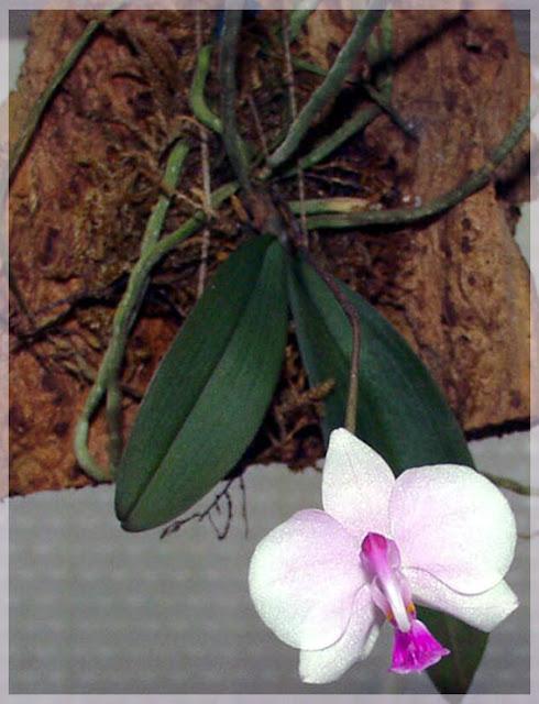 Растения из Тюмени. Краткий обзор - Страница 11 00090_0