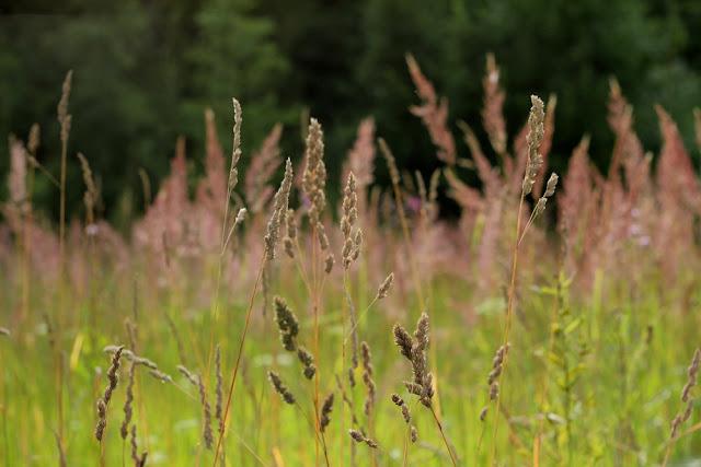 Флудилка: Лето, разнотравье