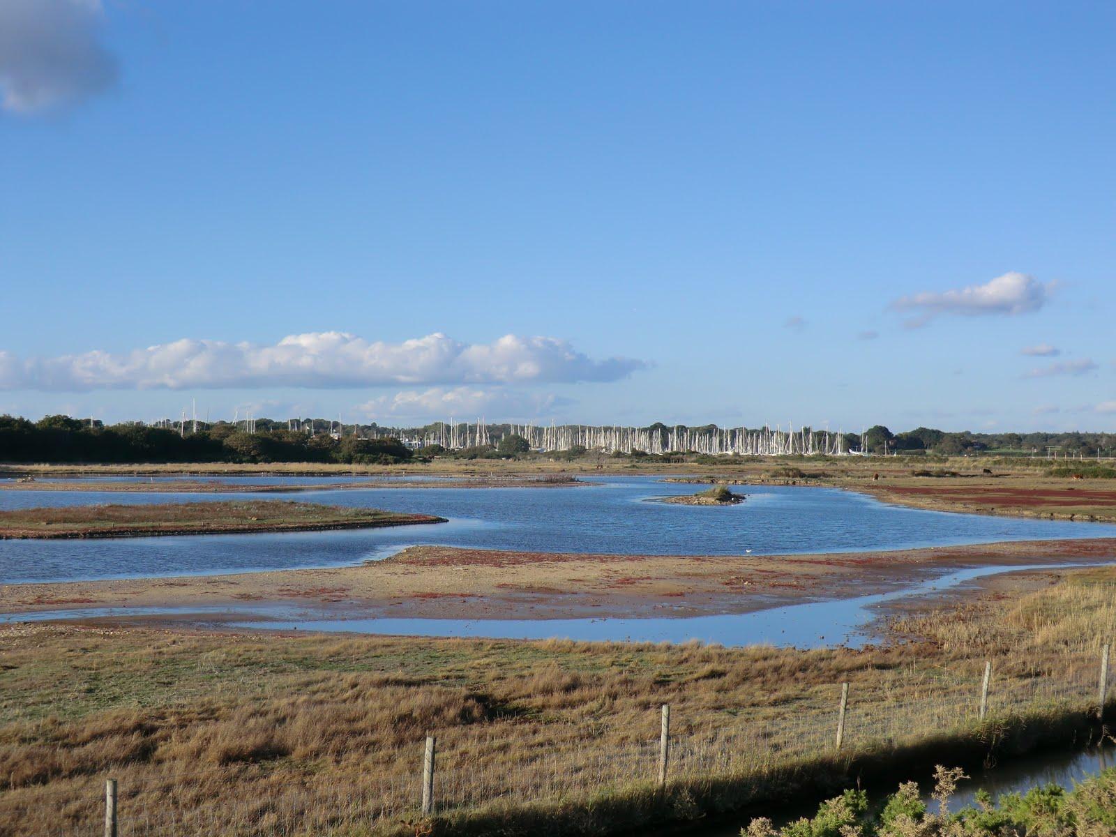 CIMG5148 Normandy Marsh