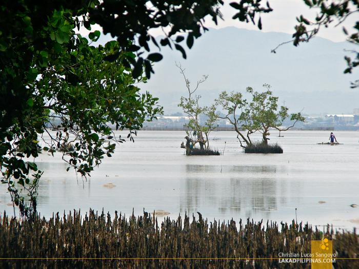 The Mangrove at the back of Mactan's Lapu-Lapu Shrine