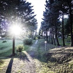 Satguru-Sirio-spring-retreat-2017-meditation-satsang-Sant-Bani-Ashram-Italy11.jpg