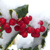 Winterkiekjes Servicetv - Ingezonden%2Bwinterfoto%2527s%2B2011-2012_43.jpg