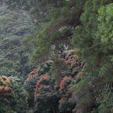 Hawaii Day 5 - 114_1449.JPG