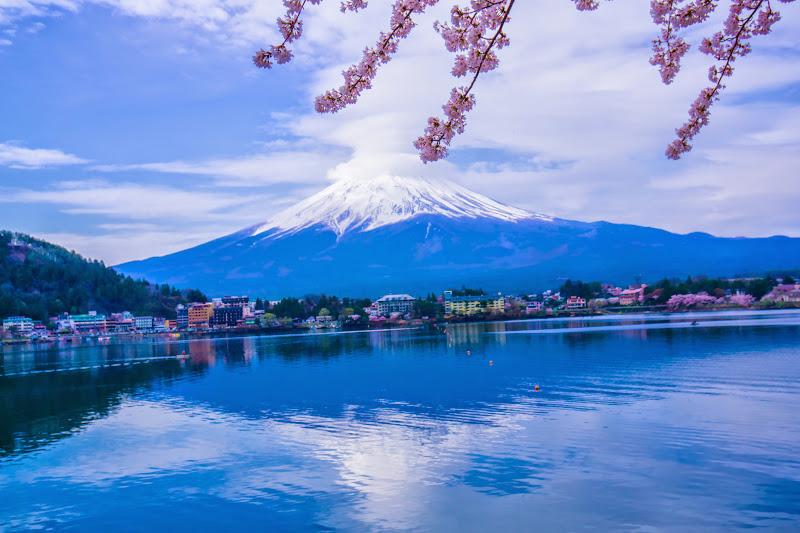 河口湖 産屋ヶ崎 桜 写真9