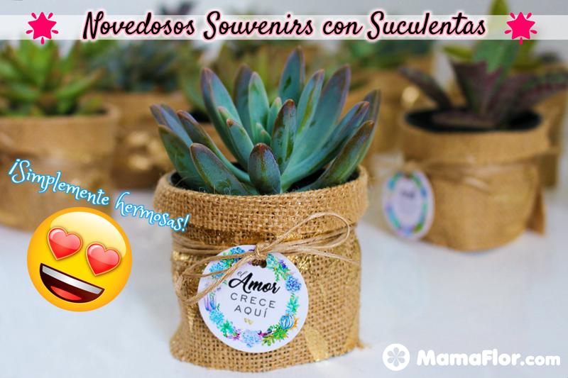 Souvenirs Suculentas Regalo Cactus Plantas Bodas Vasos