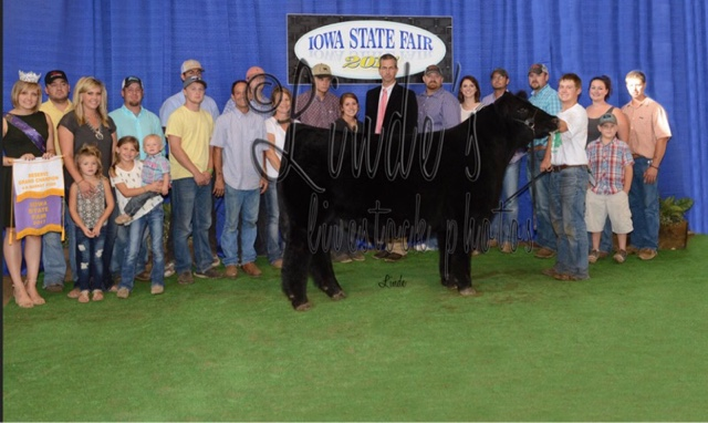 Rcc Blog Updated Pictures Iowa State Fair Steer Show