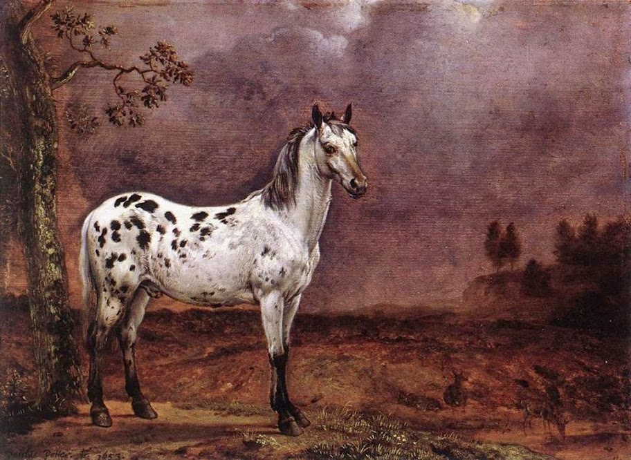 Paulus Potter - The Spotted Horse
