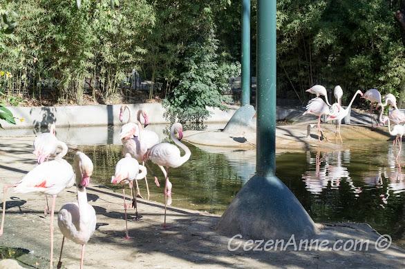 Darıca Hayvanat Bahçesi'nde, flamingolar