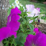 Gardening 2012 - 115_1628.JPG