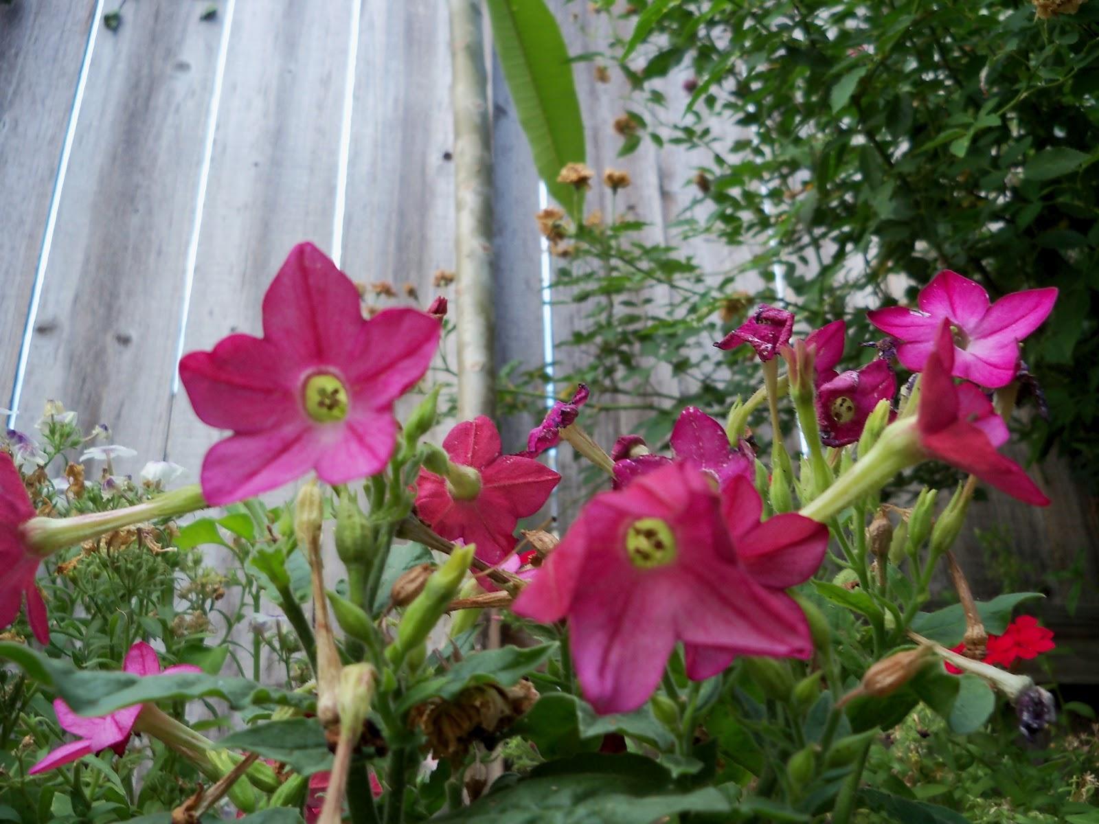 Gardening 2011 - 100_8880.JPG