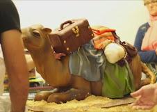 camello4.jpg