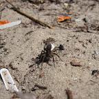 Уборка мусора на пляжах у Белой горы 023.jpg