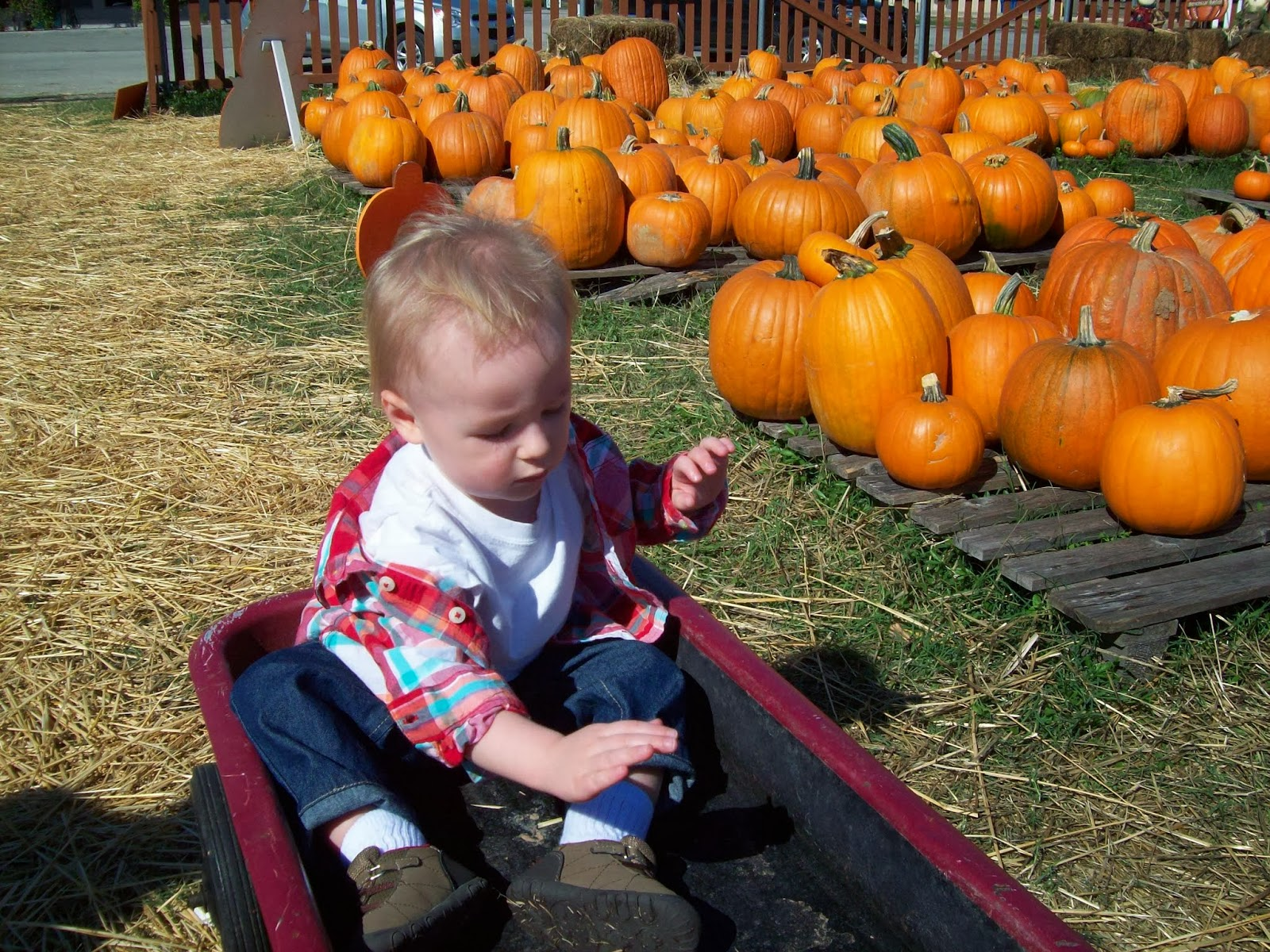 Pumpkin Patch - 114_6559.JPG