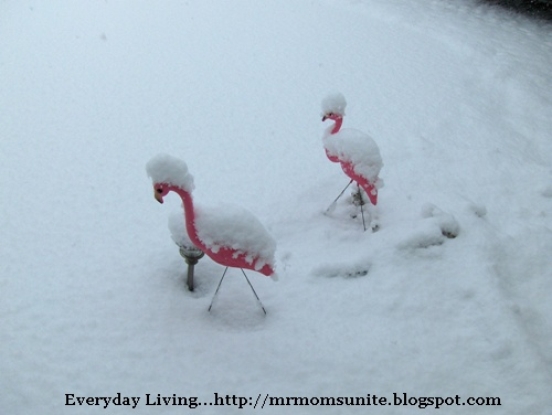 our guard flamingos, Brutus and Killer covered in snow