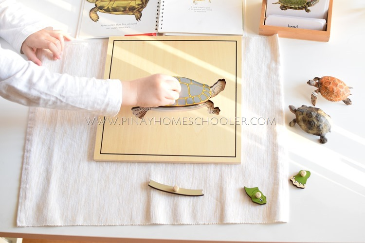 Montessori turtle puzzle