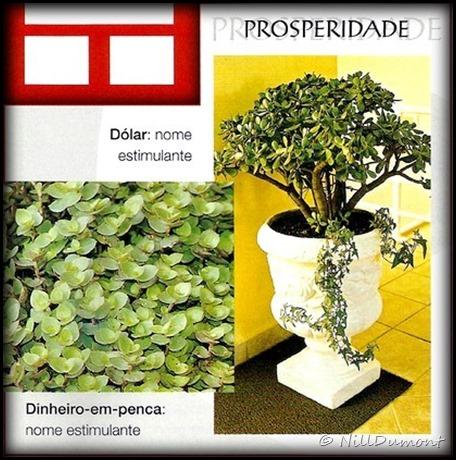 O-baguá-e-as-plantas-05
