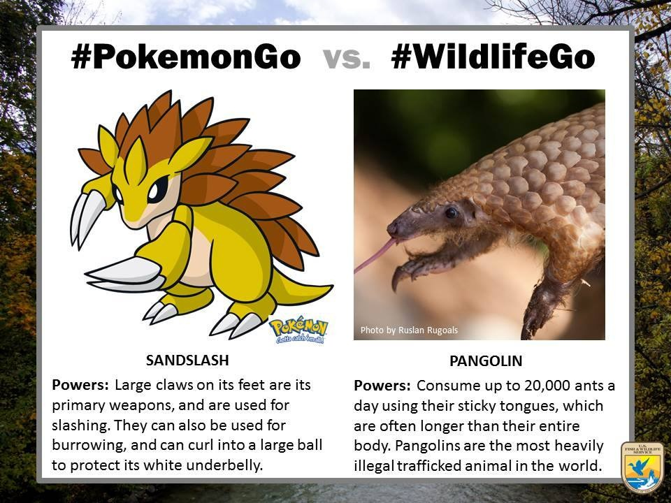pokemongo-vs-wildlifego-13