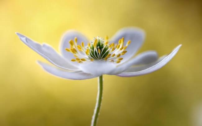 Edinburgh Florist: Prominent Flowers From Australia