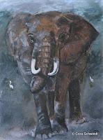 'Elefantenbulle, Pastell auf Papier, 36x48, 2003, verkauft