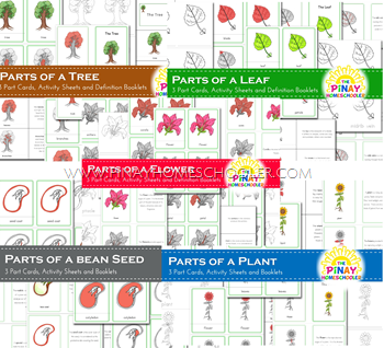 Montessori Inspired Botany Unit Bundle Learning Pack