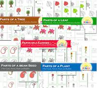 Montessori Botany Learning Materials
