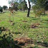 Hammo Planting - Shannon Schiesser - IMG_4948.JPG