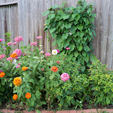 Gardening 2011 - 100_8811.JPG
