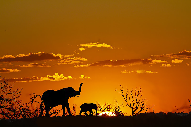 tramonto nel parco Masai Mara di linobeltrame