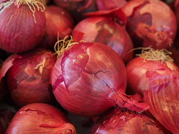 Comerciantes advierten la libra de cebolla podría volver a costar más de RD$100.00 por escasez