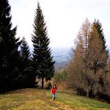 Osovnik - Vika-00726.jpg