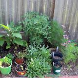 Gardening 2010, Part Two - 101_3059.JPG