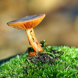 Sur la butte by Gérard CHATENET - Nature Up Close Mushrooms & Fungi