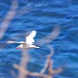 06-25-13 Annini Reef and Kauai North Shore - IMGP5292.JPG