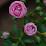 Chaithanya V Rupesh's profile photo