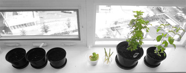 Windowsill Organic Herb Garden