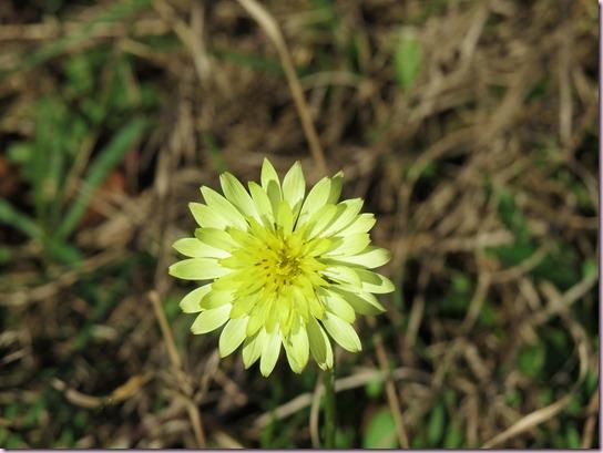flowerIMG_2232