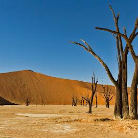 DEAD TREE LANDSCAPE  by Issi Potgieter - Landscapes Deserts ( dead valley, dead tree, dead, namibia,  )