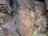 Birthday Canyon petroglyphs.