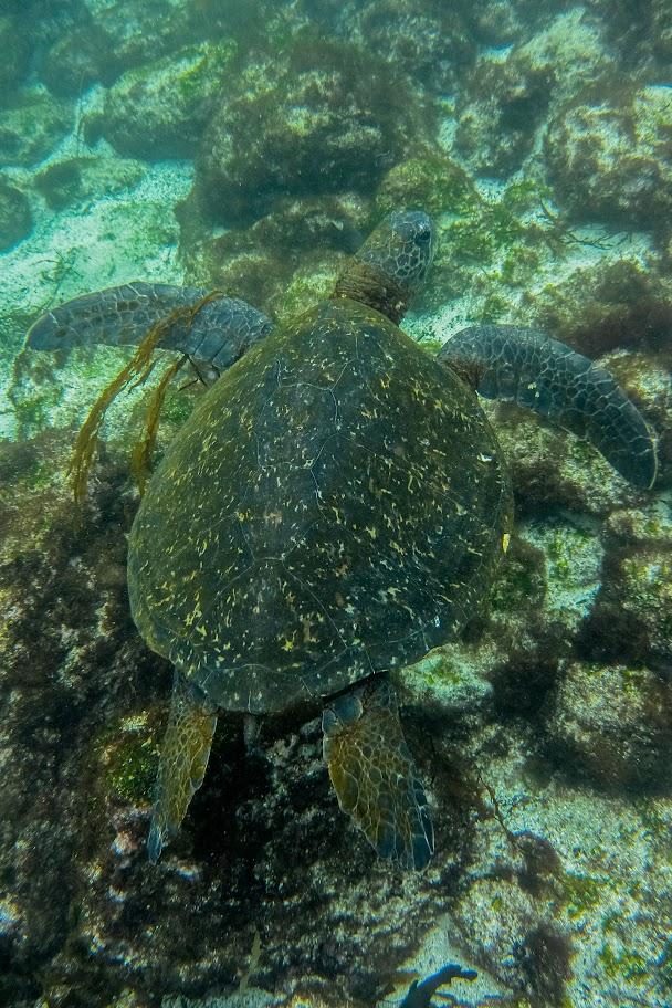 galapagos - Galapagos_FB_2-122.jpg