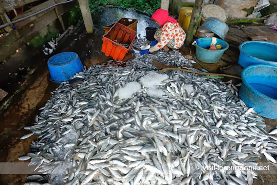 Perkampungan-Nelayan-Seberang-Takir-Fishing-Village