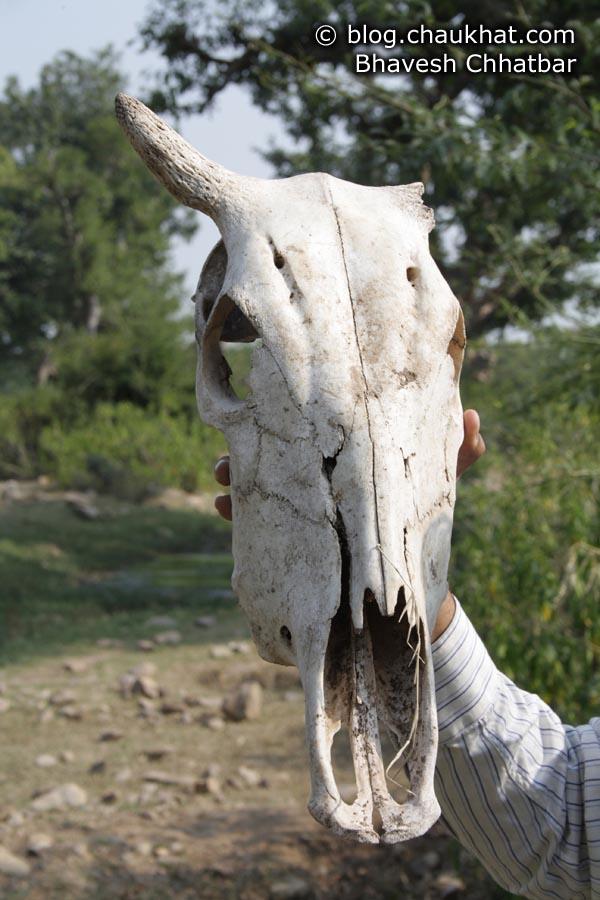 Bhangarh - Skull