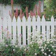 Сонник забор