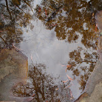 Reflection in rock pool (73725)
