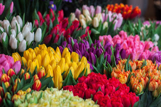 Multicolored tulips for sale in Ukraine. Photo by John-Mark Smith on Unsplash.