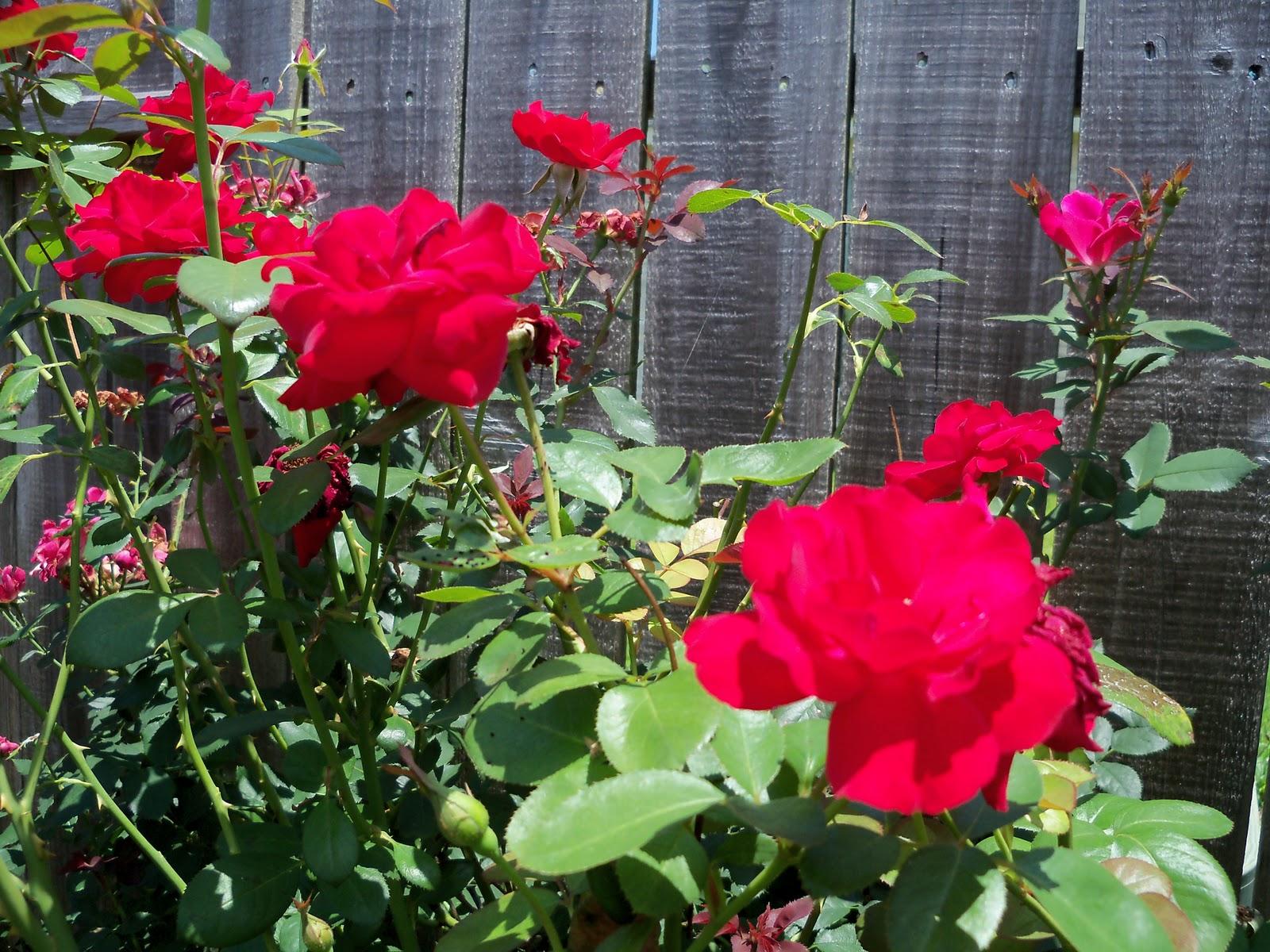 Gardening 2010, Part Three - 101_4892.JPG