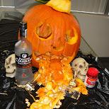 best halloween pumpkin in Etobicoke, Ontario, Canada