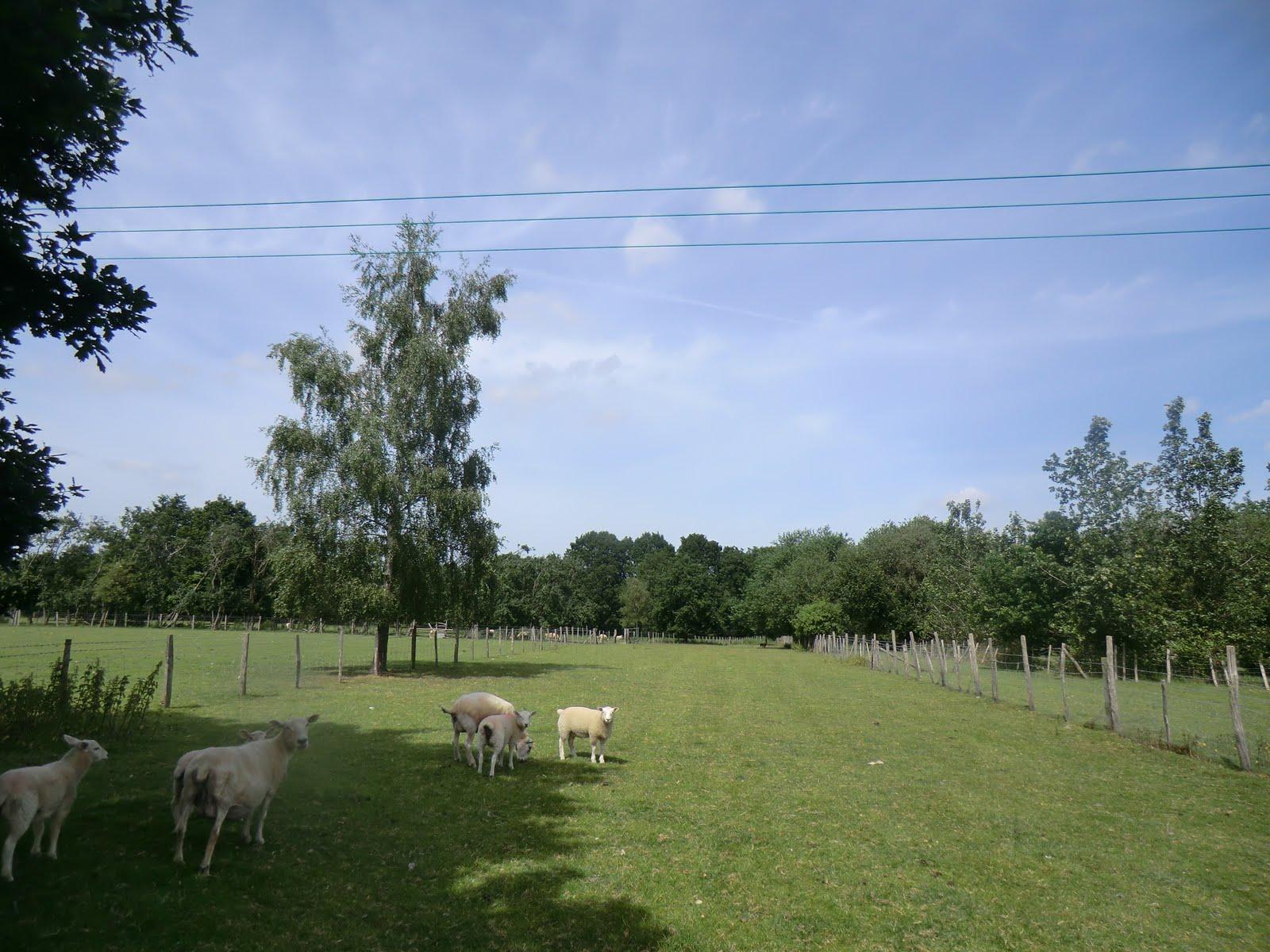CIMG2095 Brook Farm, Five Oak Green
