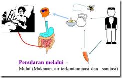Penyebab Tipes Cara Cepat Mengobati Penyakit Tipes Secara Alami dengan Mudah