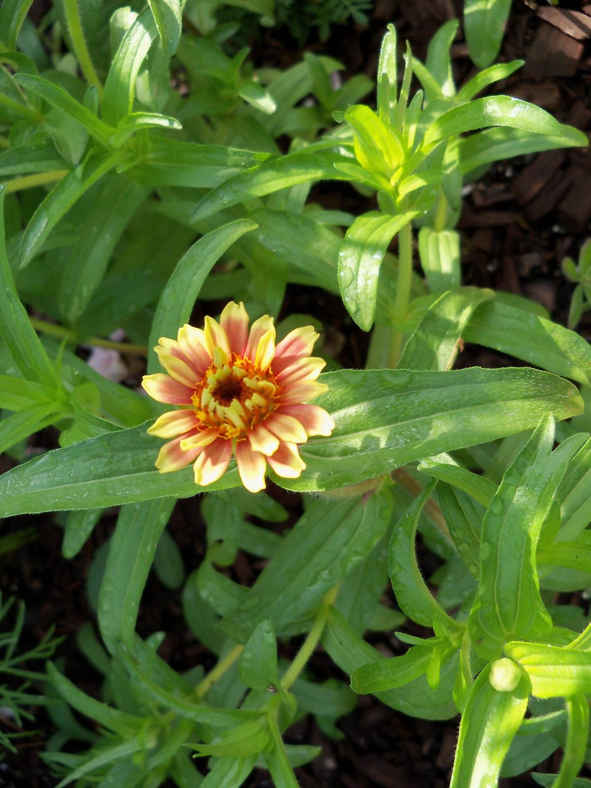 Gardening 2010, Part Two - 101_2378.JPG